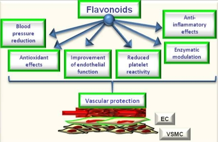flavonoid-health-benefits